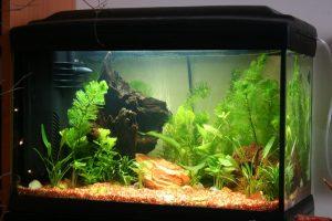 App gestione acquario